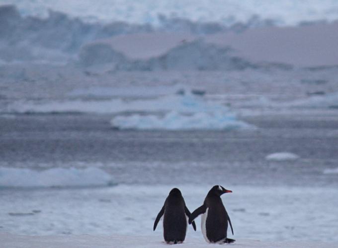Pinguoins2